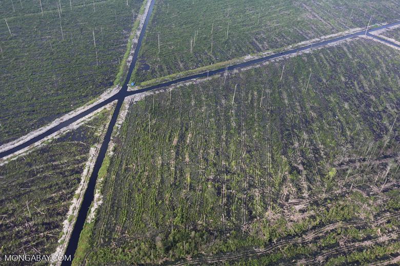 Peatlands destruction in Riau [riau_1064]