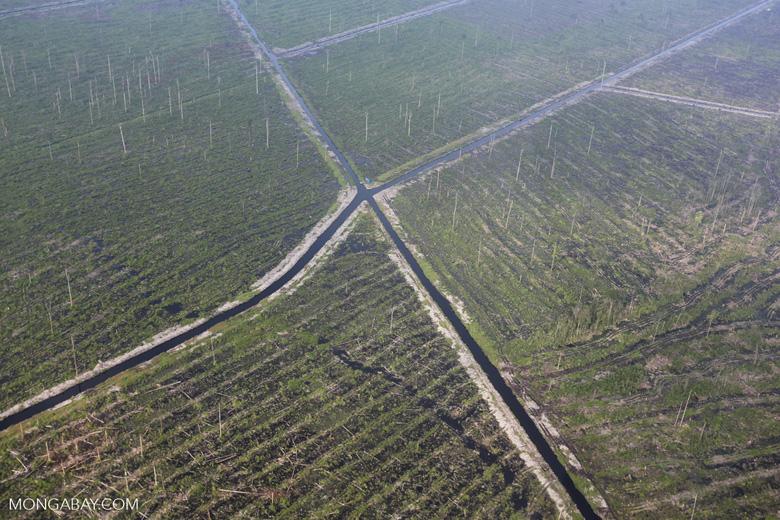 Peatlands destruction in Riau [riau_1065]