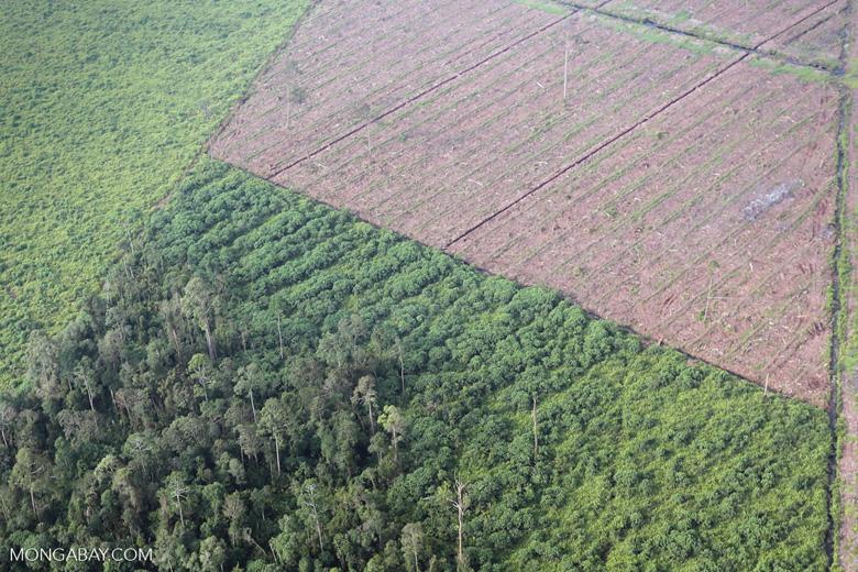 Peatlands destruction in Riau [riau_1073]