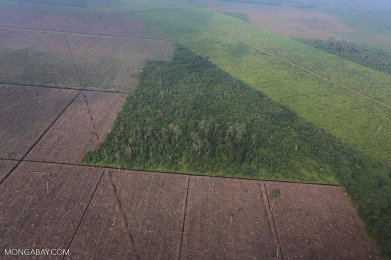 Peatlands destruction in Riau [riau_1084]