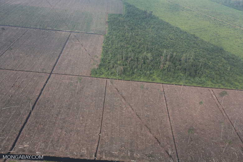 Peatlands destruction in Riau [riau_1089]