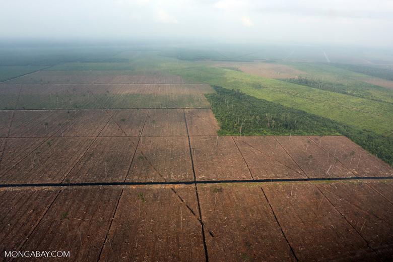 Peatlands destruction in Riau [riau_1093]