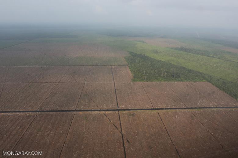 Peatlands destruction in Riau [riau_1094]