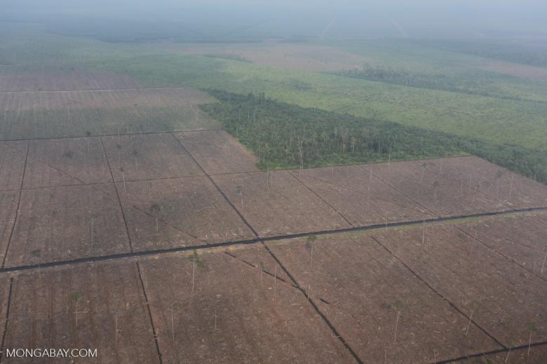 Peatlands destruction in Riau [riau_1097]