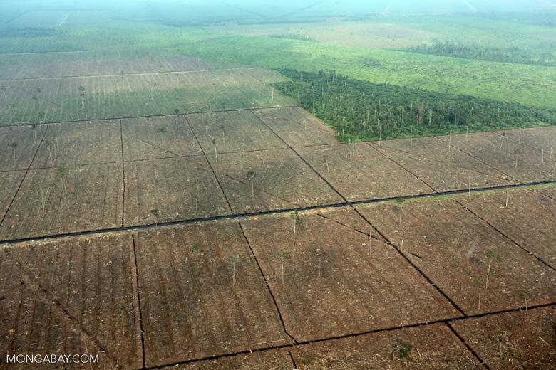 Peatlands destruction in Riau [riau_1098]