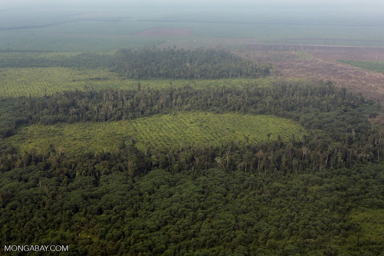 Peatlands destruction in Riau [riau_1105]