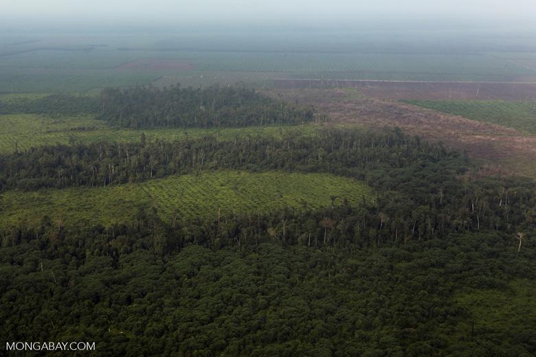 Peatlands destruction in Riau [riau_1107]