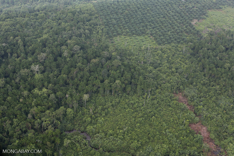 Peat forest and oil palm [riau_1116]