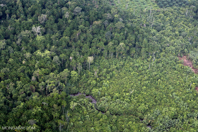 Peat forest and oil palm