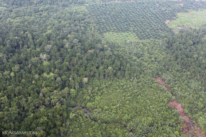 Peat forest and oil palm [riau_1120]