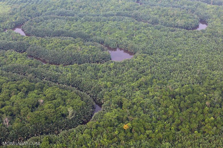 Peat forest [riau_1126]