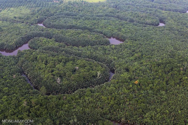 Peat forest [riau_1131]