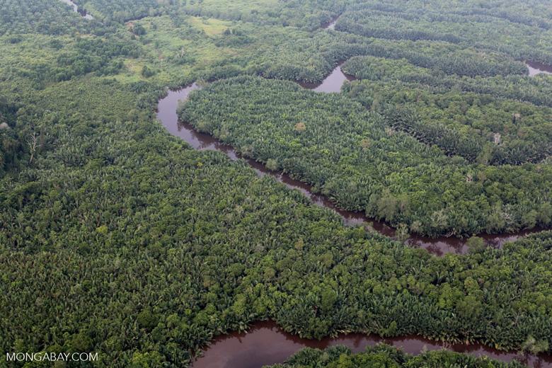 Peat forest [riau_1137]