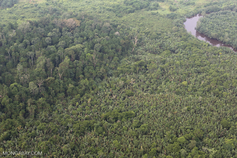 Peat forest and oil palm [riau_1140]