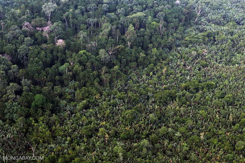 Peat forest [riau_1142]