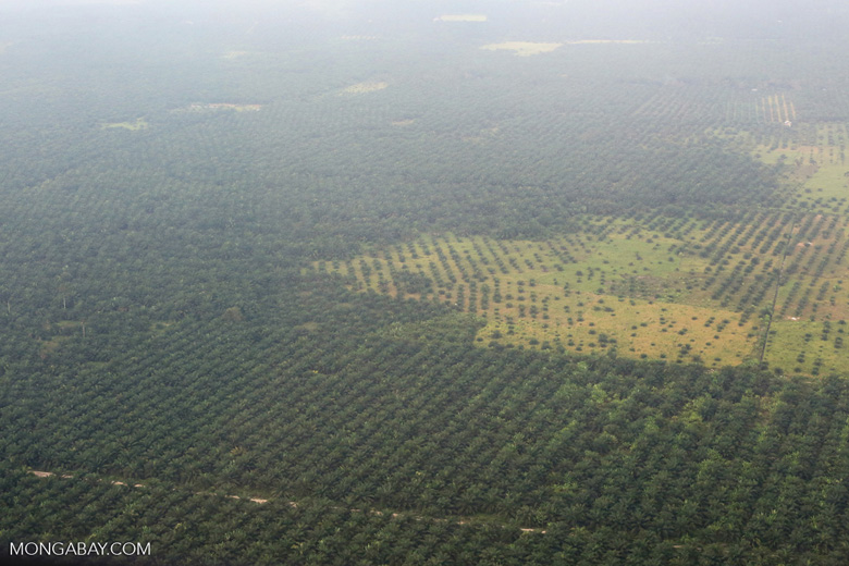 Peat forest conversion for oil palm [riau_1146]