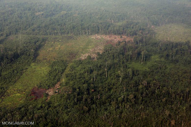 Peat lands deforestation