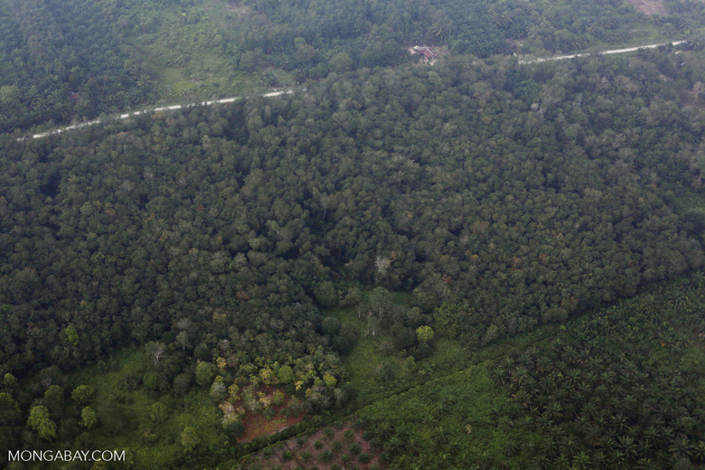 Peat forest conversion for oil palm [riau_1154]