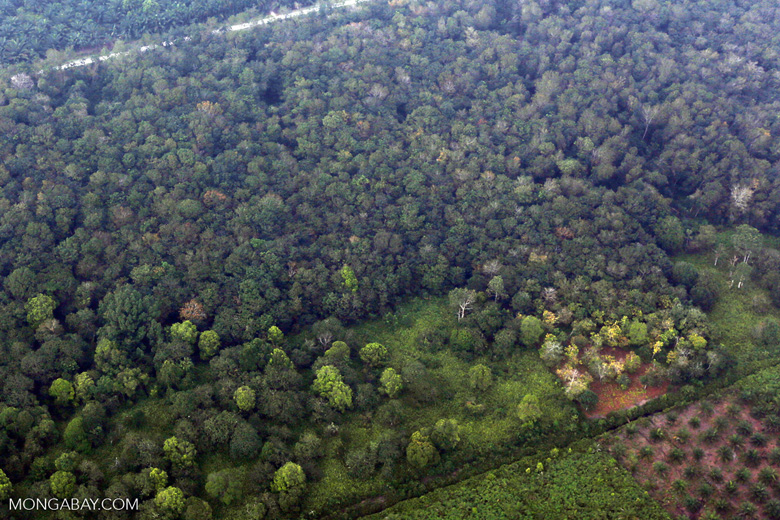 Peat forest conversion for oil palm [riau_1155]