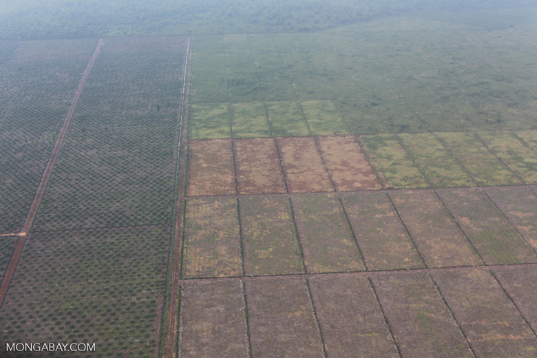 Deforestation for oil palm [riau_1165]