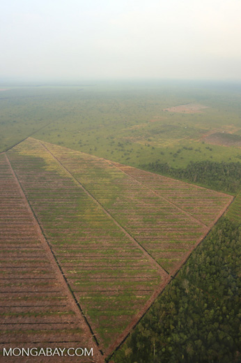 Deforestation in Riau [riau_1173]