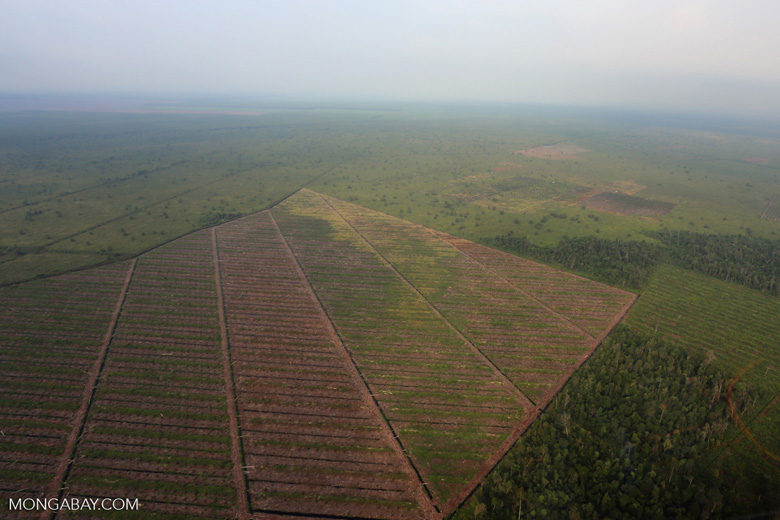 Deforestation in Riau [riau_1174]