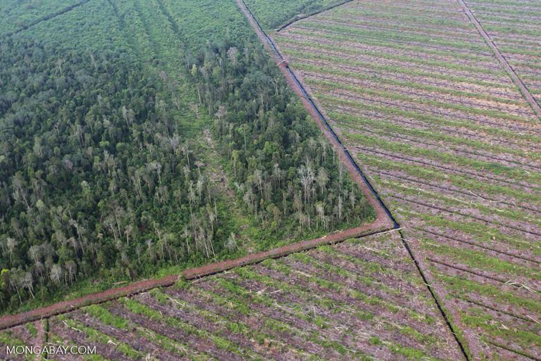 Deforestation in Riau [riau_1177]