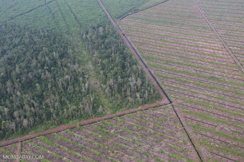 Deforestation in Riau [riau_1178]