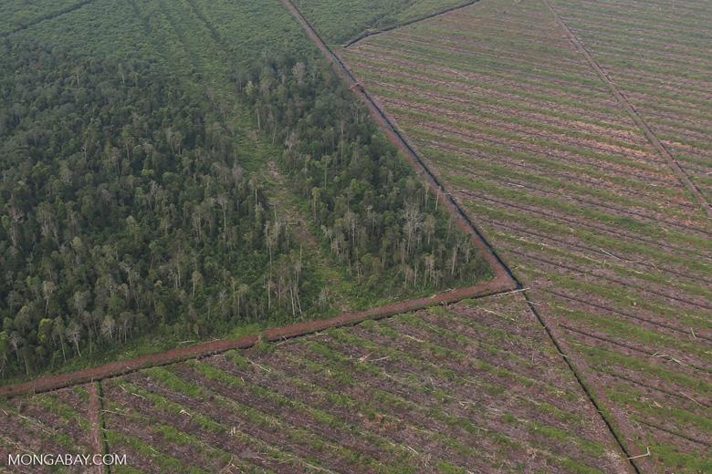 Deforestation in Riau [riau_1180]