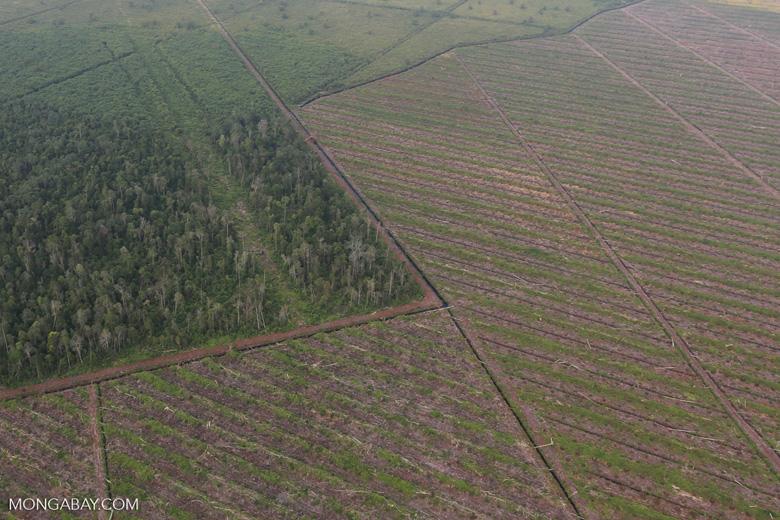 Deforestation in Riau [riau_1181]