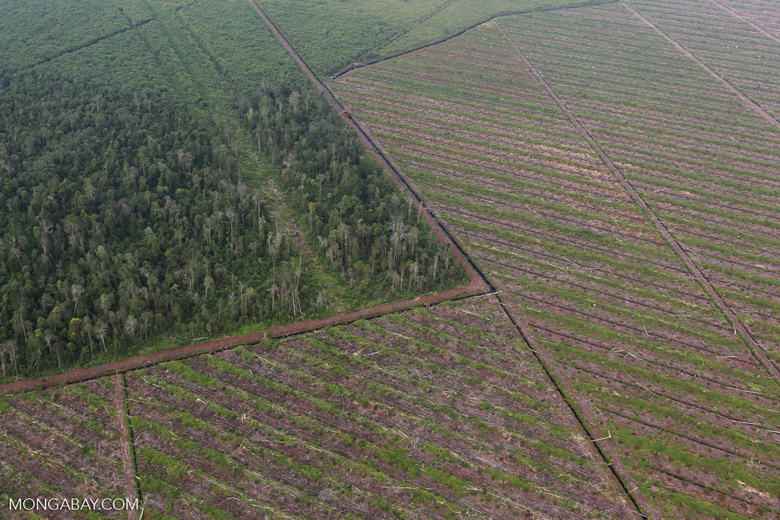 Deforestation in Riau [riau_1182]