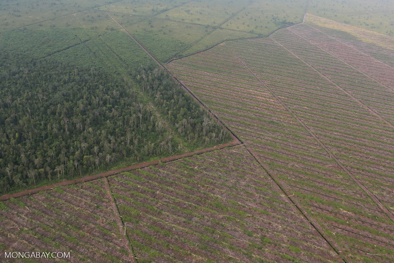 Deforestation in Riau [riau_1185]