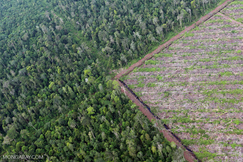 Deforestation for paper production in Sumatra, Indonesia.