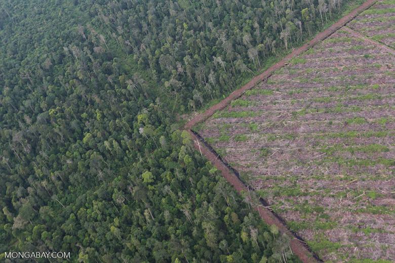 Deforestation in Riau [riau_1187]