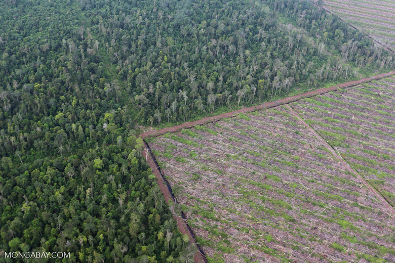 Deforestation in Riau [riau_1189]