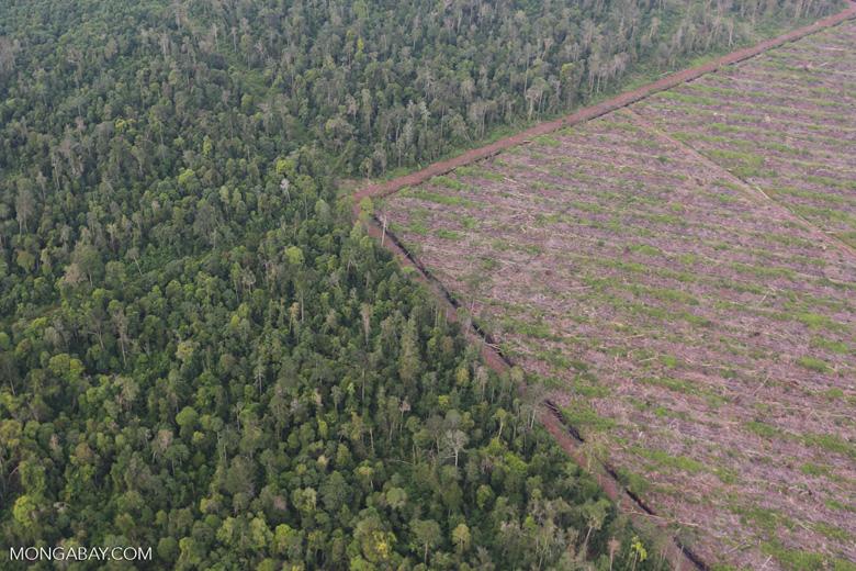 Deforestation in Riau [riau_1193]