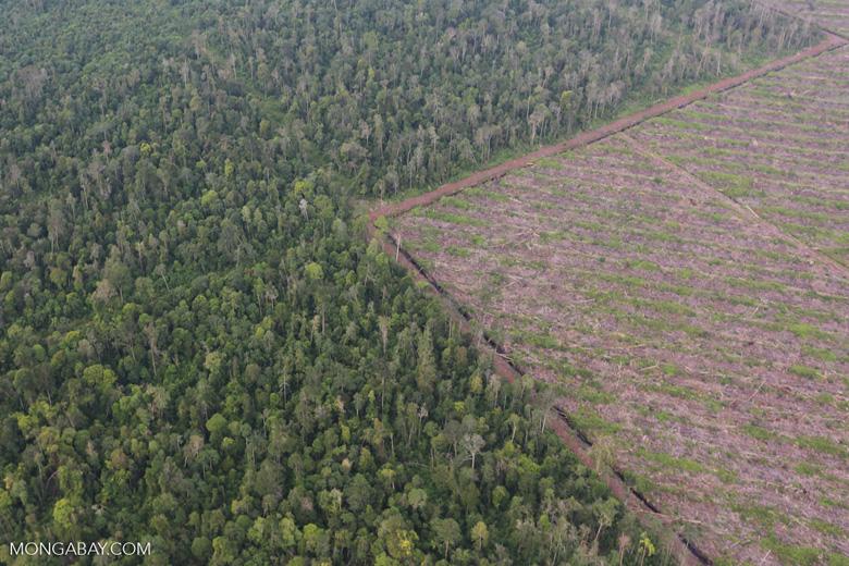 Deforestation in Riau [riau_1194]