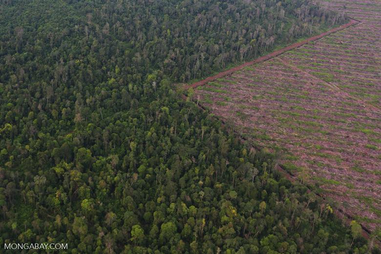 Deforestation in Riau [riau_1201]