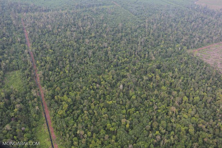 Deforestation in Riau [riau_1205]