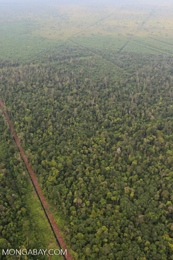Drainage canal in Riau's peat forest [riau_1206]