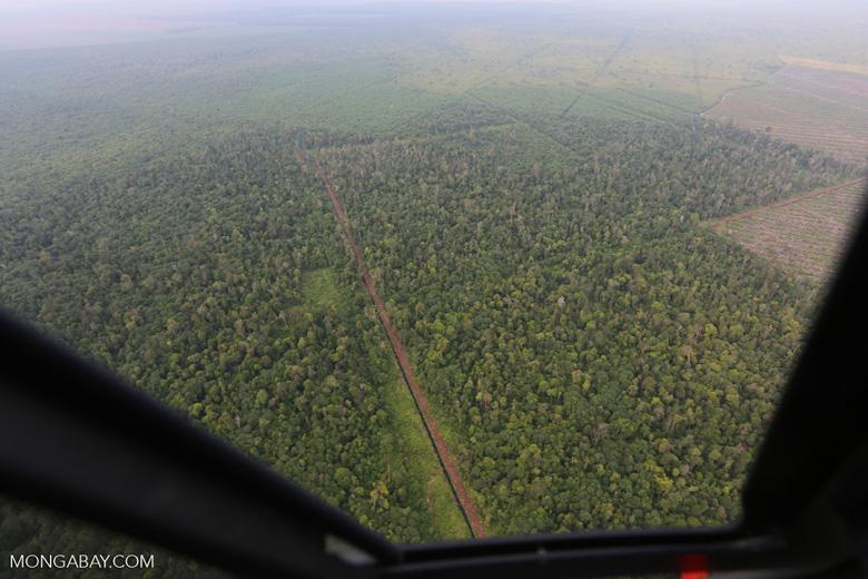 Drainage canal in Riau's peat forest [riau_1207]