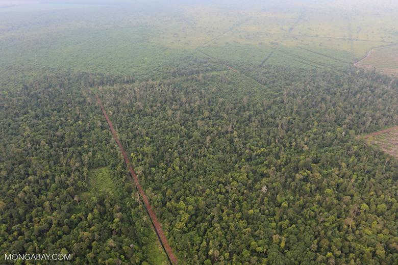 Drainage canal in Riau's peat forest [riau_1208]