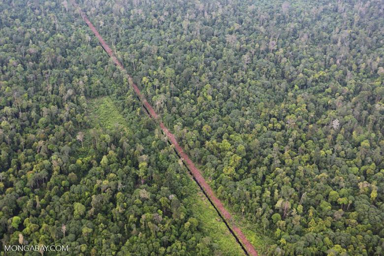 Un canal creusé par l'homme draine une zone humide de tourbe à Riau, en Indonésie, pour rendre la terre plus propice à l'agriculture. Image de Rhett Butler / Mongabay.