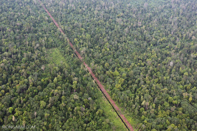 Drainage canal in Riau's peat forest