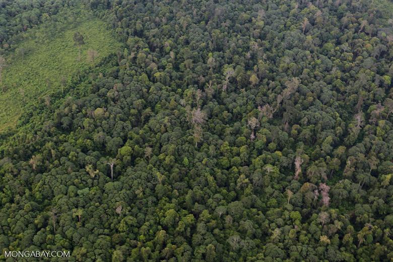 Deforestation in Riau [riau_1220]