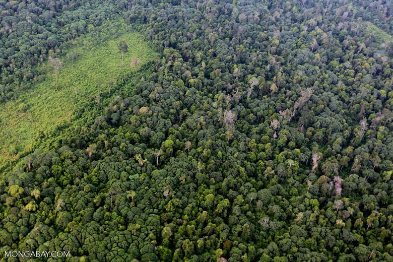 Deforestation in Riau [riau_1221]
