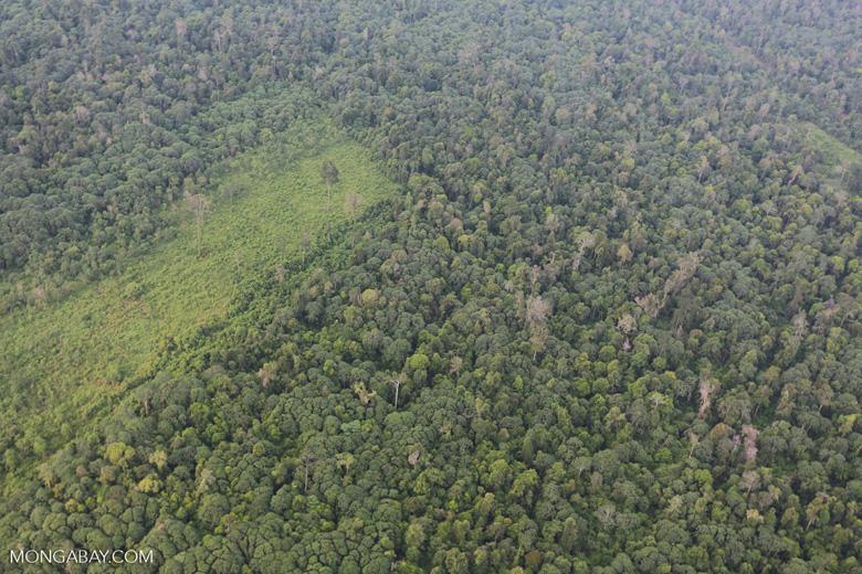 Deforestation in Riau [riau_1223]