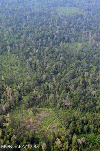 Deforestation in Riau [riau_1224]