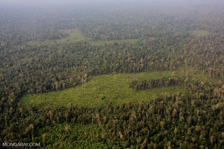 Deforestation in Riau [riau_1226]