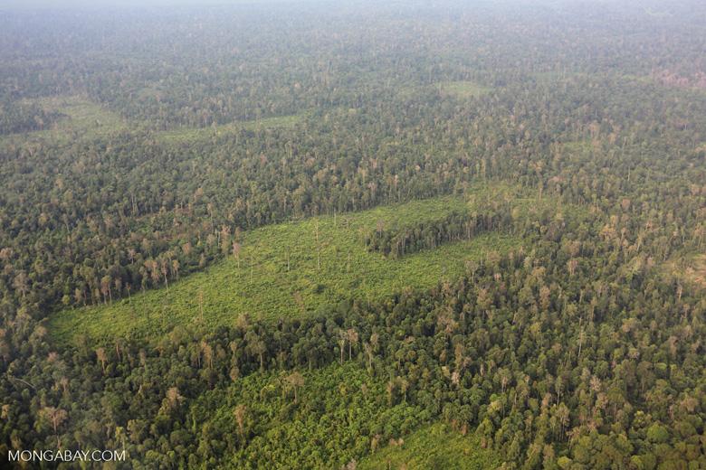 Deforestation in Riau [riau_1227]